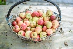 Großer Korb von Äpfeln Lizenzfreies Stockbild