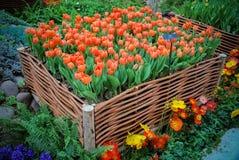 Großer Korb von Tulpen lizenzfreie stockbilder