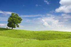 Großer Limettenbaum, kleine Hütte und hölzerner Zaun am Grün Lizenzfreies Stockfoto