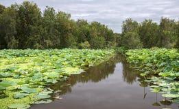 Großer Lotosteich im Naturreservat Stockfotografie