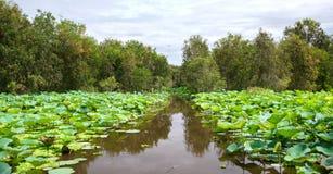 Großer Lotosteich im Naturreservat Stockbilder