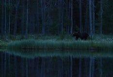 Großer männlicher Bär Stockfotografie