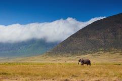 Großer männlicher Elefant, der in die Savanne geht Lizenzfreies Stockfoto