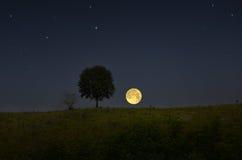 Großer Mond und einsamer Baum am Abend Stockbilder