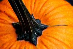 Großer orange Kürbis stockfotos