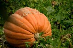Großer orange Kürbis auf einem Gebiet Lizenzfreies Stockfoto
