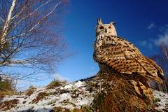 Großer Ostsibirier Eagle Owl, Bubo Bubo sibiricus, sitzend auf Wiese mit dem Schnee, Weitwinkel mit blauem Himmel Lizenzfreies Stockfoto