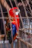 Großer Papagei in einem Käfig Stockfotografie