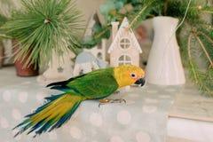 Großer Papagei mit einem gelben Kopf Stockbilder