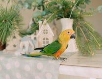 Großer Papagei mit einem gelben Kopf Lizenzfreies Stockbild