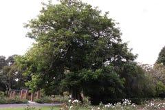 Großer Park des Baums öffentlich stockfotografie