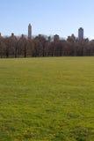 Großer Rasen in New York stockbilder