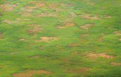 Großer Rasenbereich Stockfoto