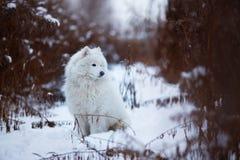 Großer rauhaariger Hund, der auf dem Schnee sitzt Lizenzfreie Stockfotografie