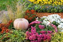 Großer reifer Kürbis, der aus den Grund im Garten unter den Blumen liegt Lizenzfreies Stockfoto