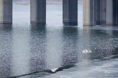 Großer Reiher und Brücke lizenzfreie stockbilder