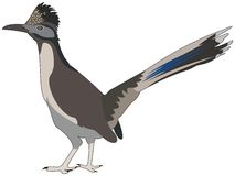 Großer Roadrunnervogel Lizenzfreies Stockfoto