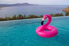 Großer rosa Flamingo für das Sweeming im Pool mit Seeansicht lizenzfreie stockbilder