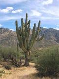 großer Saguarokaktus in der Wüste mit den Bergen als Hintergrund in Arizona lizenzfreies stockfoto