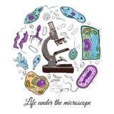Großer Satz mit Mikroskop und verschiedenen Mikroorganismen Lizenzfreie Stockfotos
