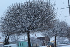 Großer schöner Baum verzierter Schnee Winter Frost auf der Straße Stockfotografie