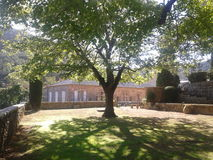Großer Schattenbaum Stockfoto