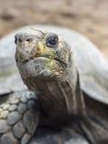 Großer Schildkrötenkopf geschossen im Zoo lizenzfreies stockbild