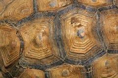Großer Schildkrötenpanzer Stockfoto