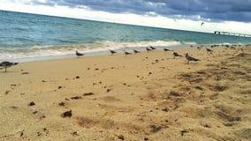 Großer Schuss des schönen Ozeanwassers am Strand in Miami mit Vögeln stock footage