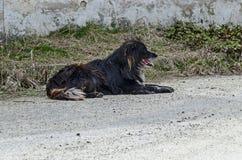 Großer großer schwarzer Neufundland-Hund, der nach einem Weg in der Landschaft, Plana-Berg sich entspannt lizenzfreies stockfoto