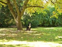 Großer Schweizer Gebirgshund im Garten lizenzfreie stockfotos