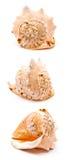 großer Seashell Lizenzfreies Stockfoto