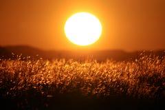 Großer Sonnenuntergang in der afrikanischen Savanne Stockfoto