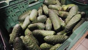 Großer Stapel von den frischen grünen organischen Gurken bereit zum Verkauf im Supermarkt Hintergrundstapel des Gurkenlandwirtsch stock video footage