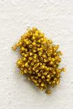 Großer Stapel von kleinen gelben jungen Spinnen Stockfoto