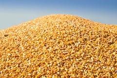 Großer Stapel von Mais stockfoto