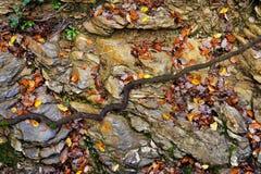 Großer Stein mit Herbstlaub im Wald Stockfotos