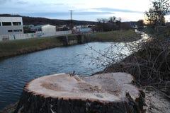 Großer Stumpf durch den Fluss lizenzfreie stockbilder