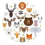 Großer Tiergesichtsikonensatz Karikaturköpfe des Fuchses, Nashorn, Bär, Waschbär, Hase, Löwe, Eule, Kaninchen, Wolf, Flusspferd,  Stockfotografie