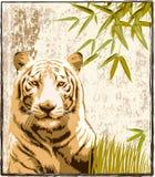 Großer Tiger im Dschungel Lizenzfreie Stockfotos
