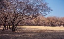 Großer trockener Wald Stockfotos