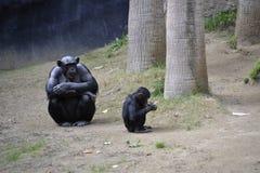 Großer und kleiner Affe Lizenzfreie Stockfotografie