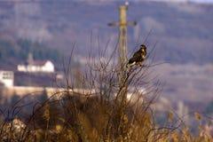 Großer Vogel, Adler Lizenzfreie Stockbilder