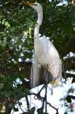 Großer Vogel auf Niederlassung Lizenzfreie Stockbilder