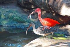 Großer Vogel fischt Stockfotografie