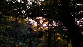 Großer Wald Stockfoto
