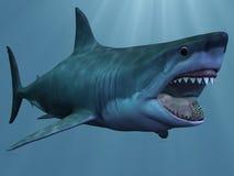 Großer weißer Haifisch lizenzfreie abbildung