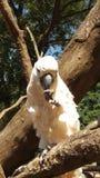 Großer weißer Papagei, der auf einem Baumast sitzt stockbild