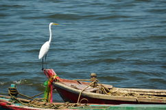 Großer weißer Reiher, der auf Boot steht Stockfoto