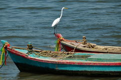 Großer weißer Reiher, der auf Boot steht lizenzfreies stockbild